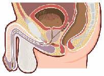 排尿痛や残尿感、陰部のカユミなどに用いる